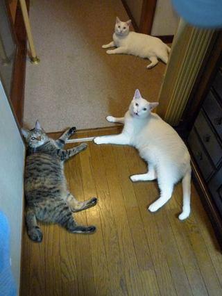 Gorogoro3cats