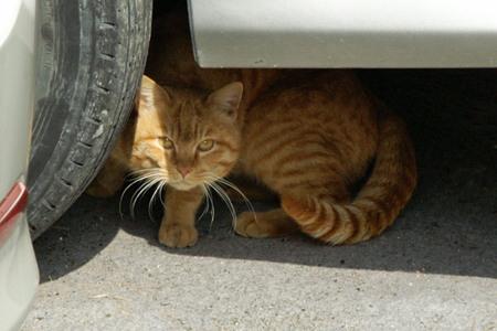 Seasidecat